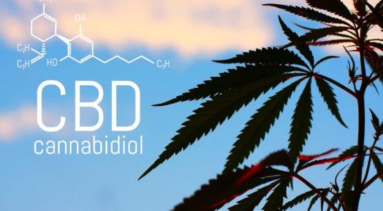 Olejek CBD: co to jest? Jakie ma właściwości?